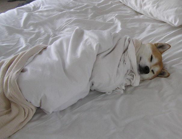 20 Divertidos Perros que NO te dejarán dormir en tu Cama esta Noche