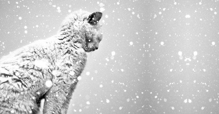 24 Fotografias en blanco y negro que te dejaran sin aliento banner