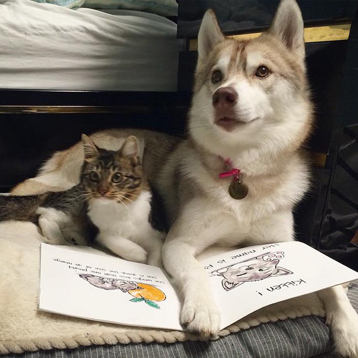 Amistad 3 huskies y gato 09