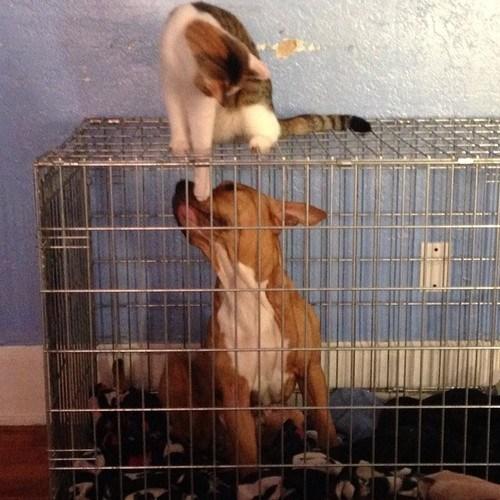 Animales comportandose como cabroncetes 03