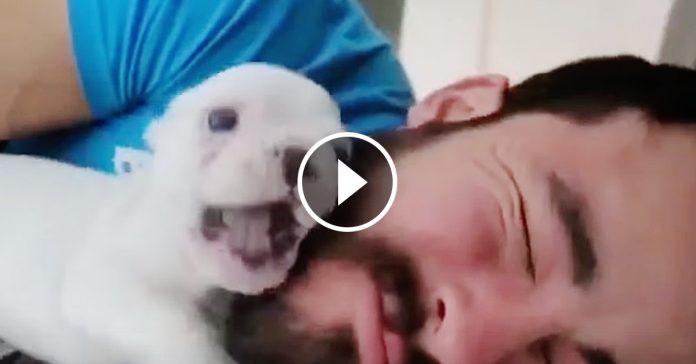 Cachorrito mejor despertador del mundo banner