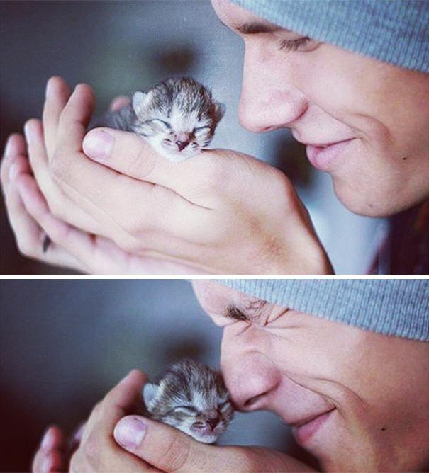 Chicos Sexys con gatitos es todo lo que necesitas ahora miauismo 01
