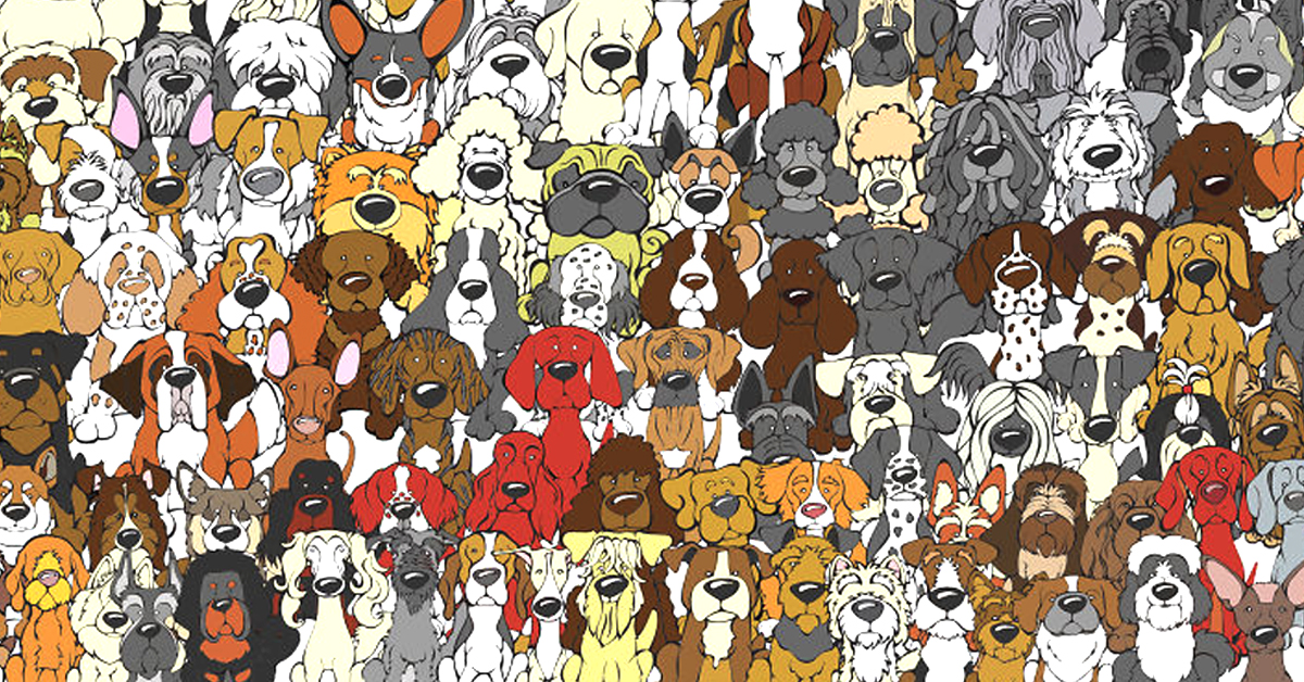 картинка найди медведя среди собак как