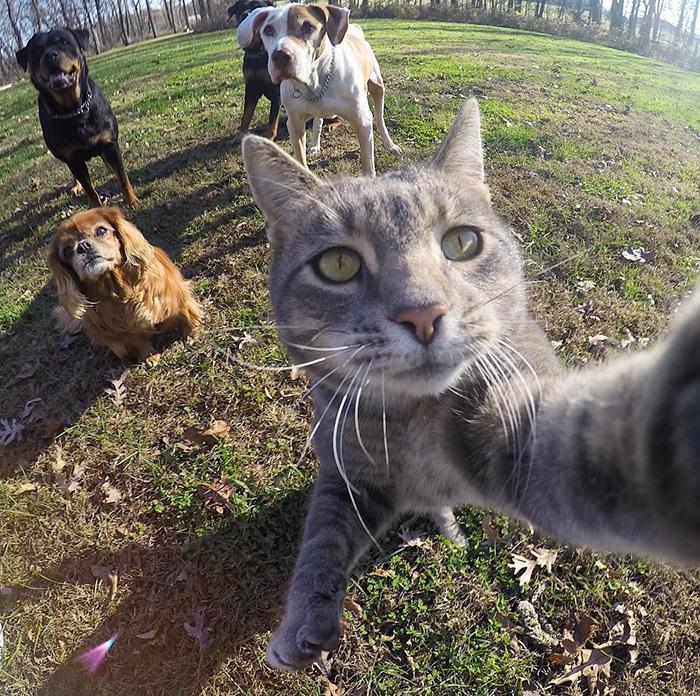 Este gato se toma mejores selfies que tu 01