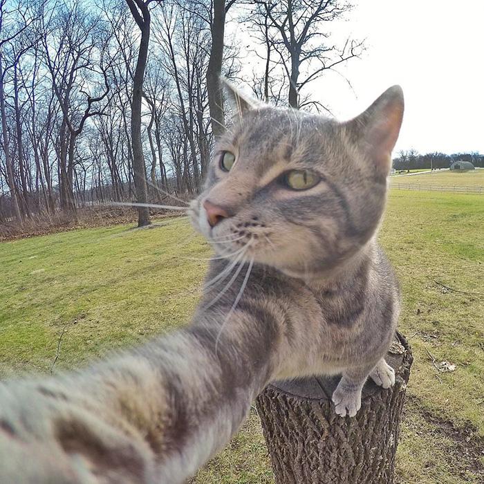Este gato se toma mejores selfies que tu 02