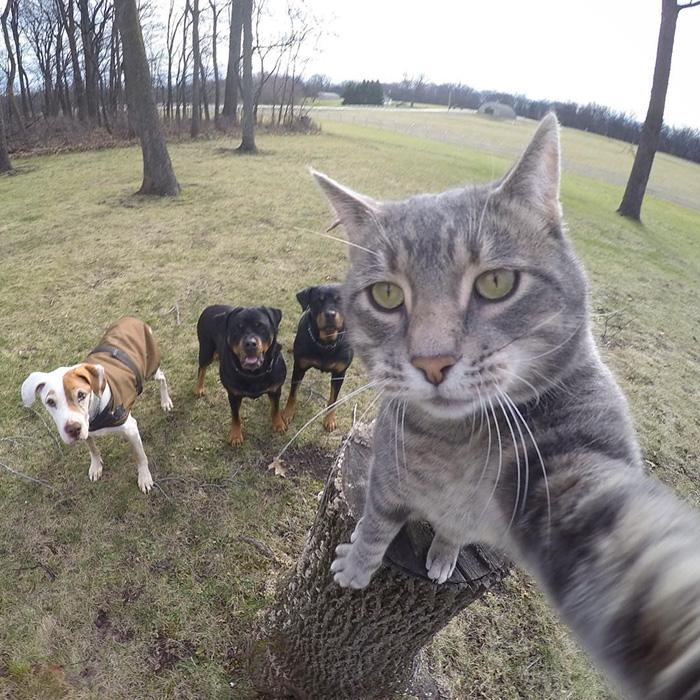 Este gato se toma mejores selfies que tu 03