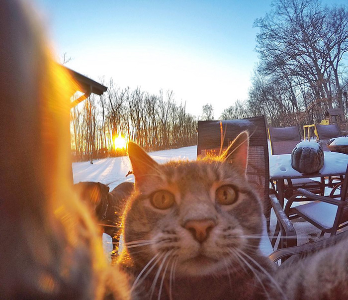 Este gato se toma mejores selfies que tu 04