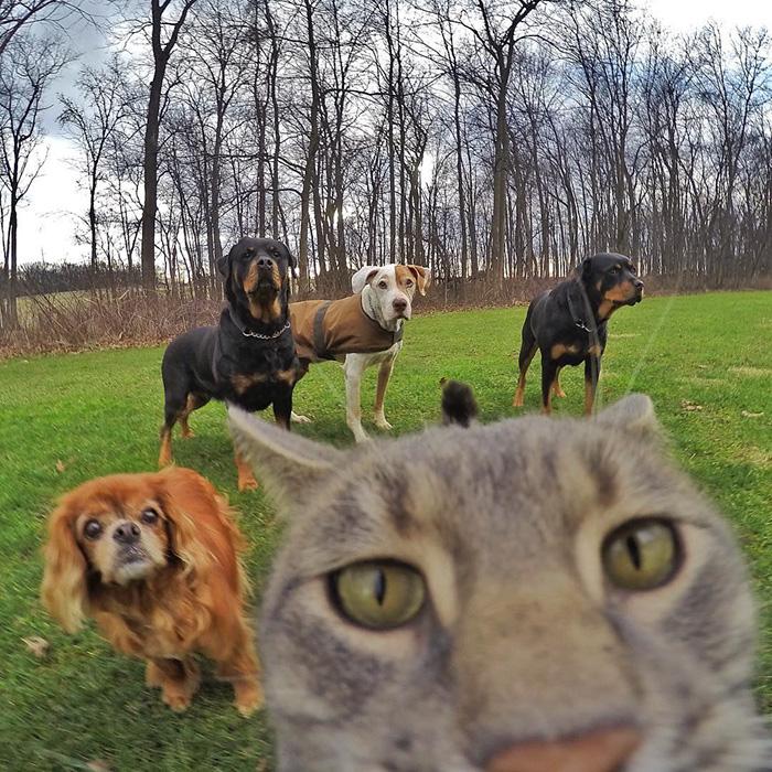 Este gato se toma mejores selfies que tu 05