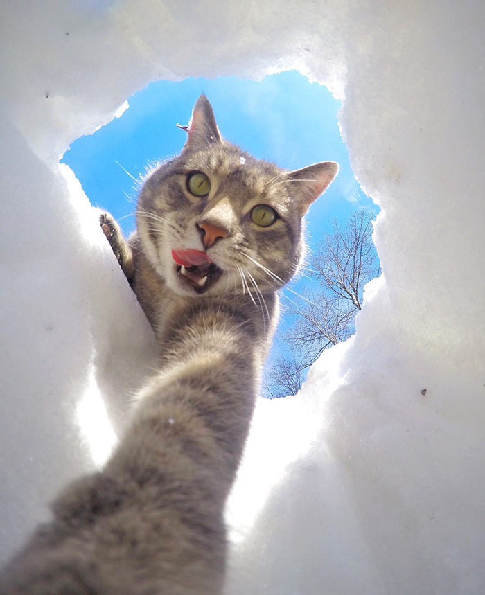 Este gato se toma mejores selfies que tu 06
