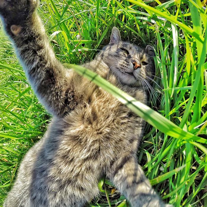 Este gato se toma mejores selfies que tu 08