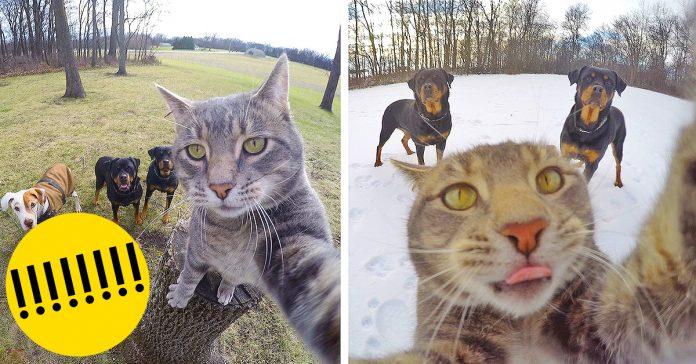 Este gato se toma mejores selfies que tu banner