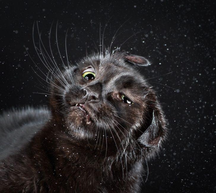Gatos sacudiendose divertidas fotografias Carli davidson 04