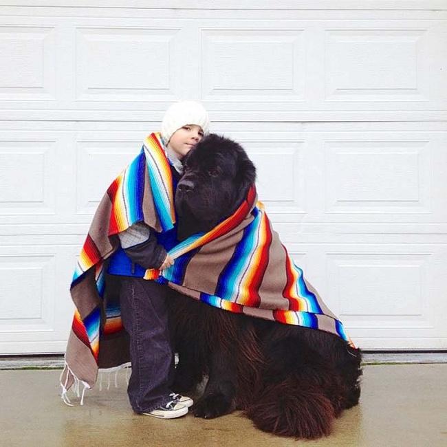 Los perros son los animales mas leales 01
