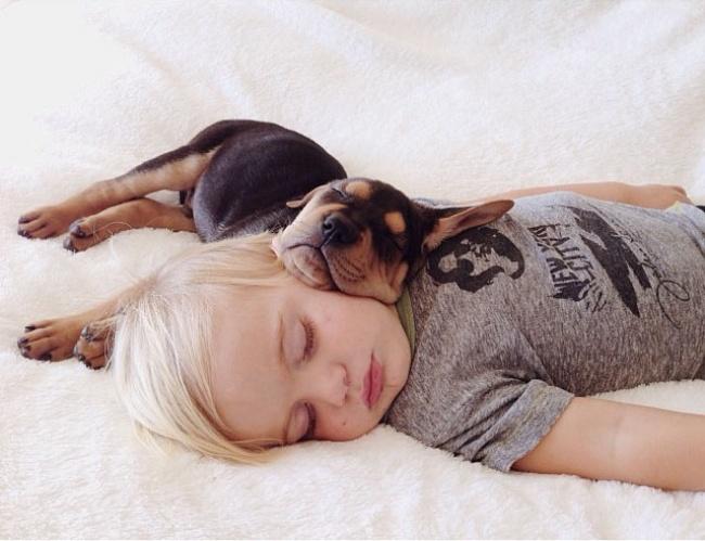 Los perros son los animales mas leales 06