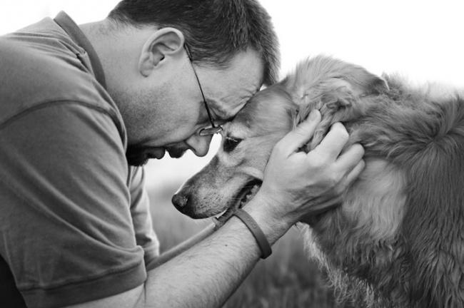 Los perros son los animales mas leales 08
