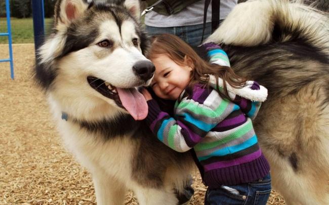 Los perros son los animales mas leales 13