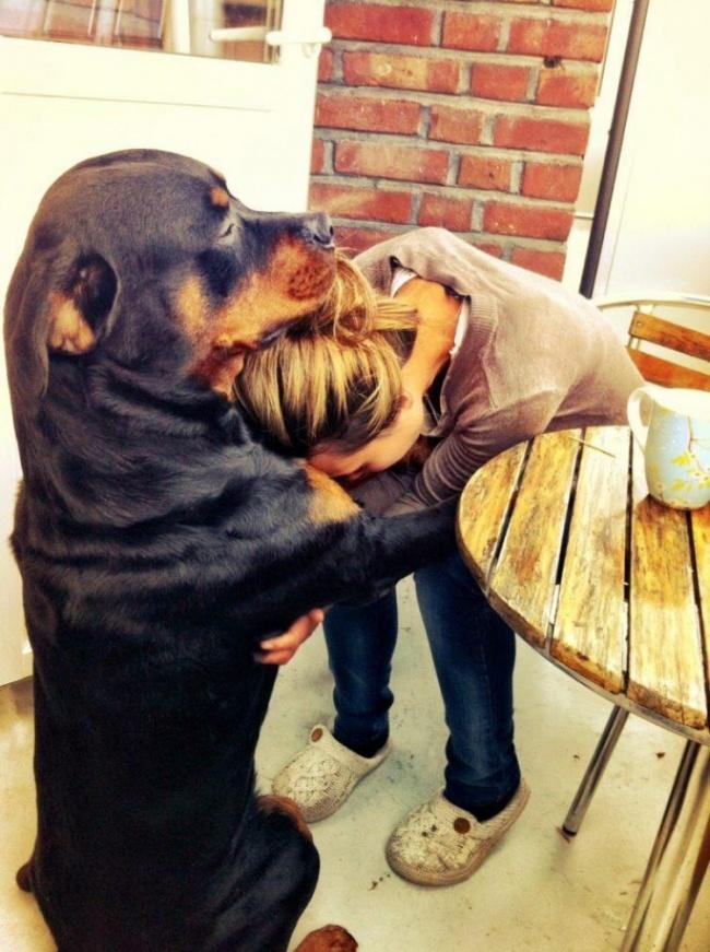 Los perros son los animales mas leales 14