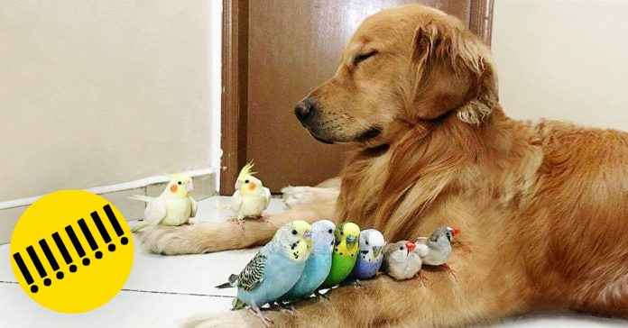 Los perros son los animales mas leales banner