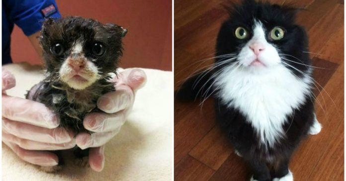 antes y despues gatos rescatados