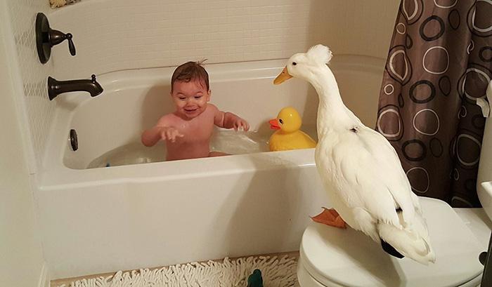 beaker el pato guardian 02