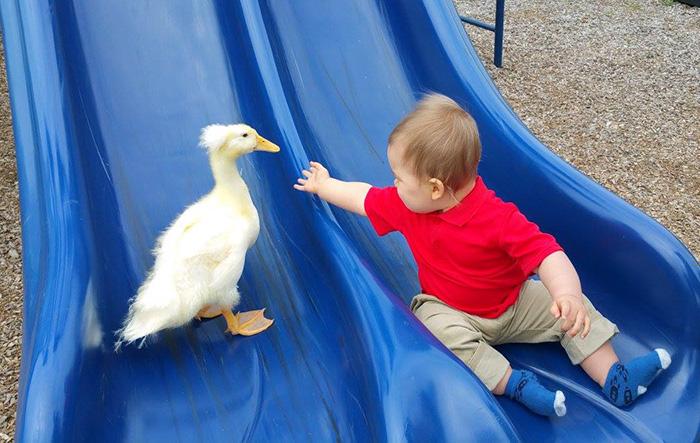 beaker el pato guardian 09