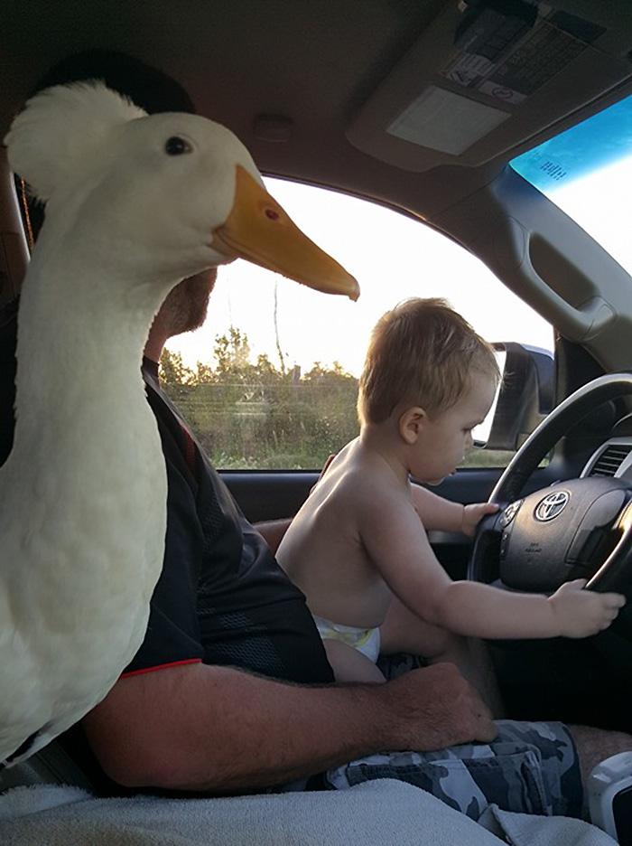beaker el pato guardian 10