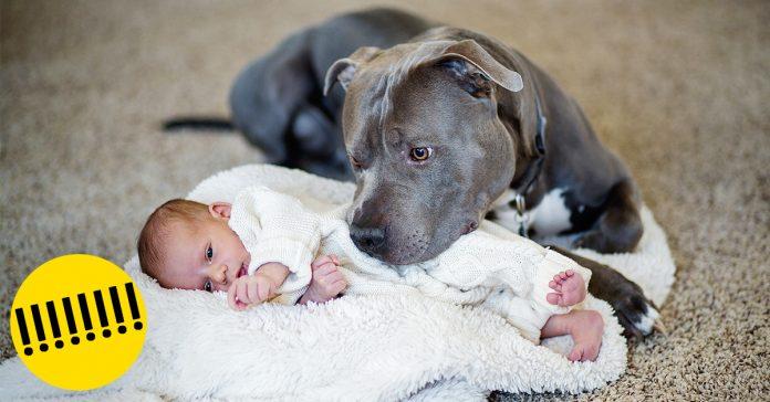 llego el bebe y el pitbull tenia que irse banner