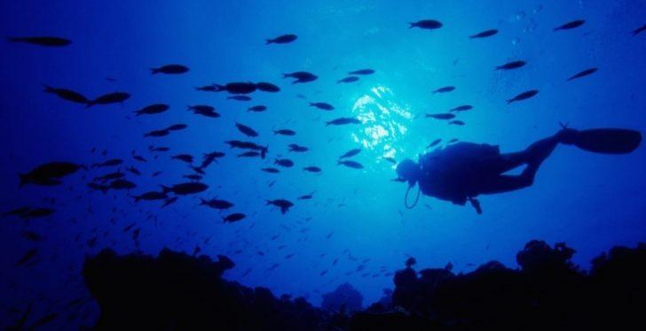 Lo que este Buceador encontró en el Fondo del Océano te Pondrá los Vellos de Punta