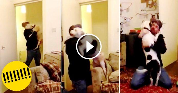 perro rescatado se vuelve loco cuando su padre llega a casa banner