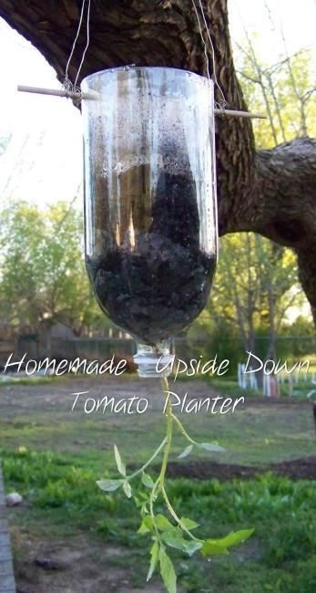 plantar tomates botellas plastico 13