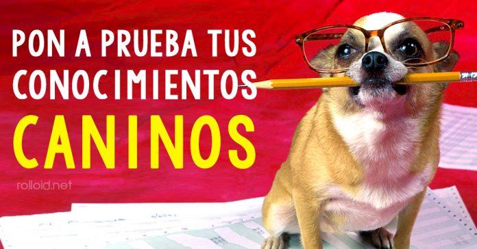 pon a prueba tus conocimientos caninos banner