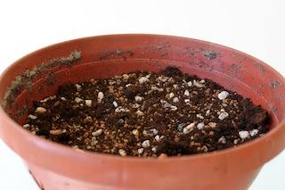 Como hacer crecer tu propio bonsai con una semilla 01