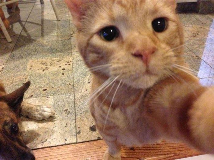 Gatos han dominado los selfies 01