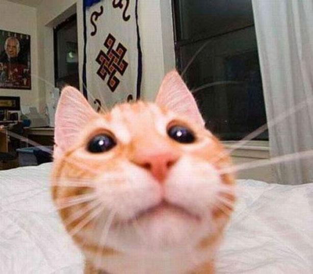 Gatos han dominado los selfies 03