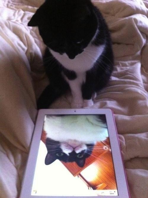 Gatos han dominado los selfies 04