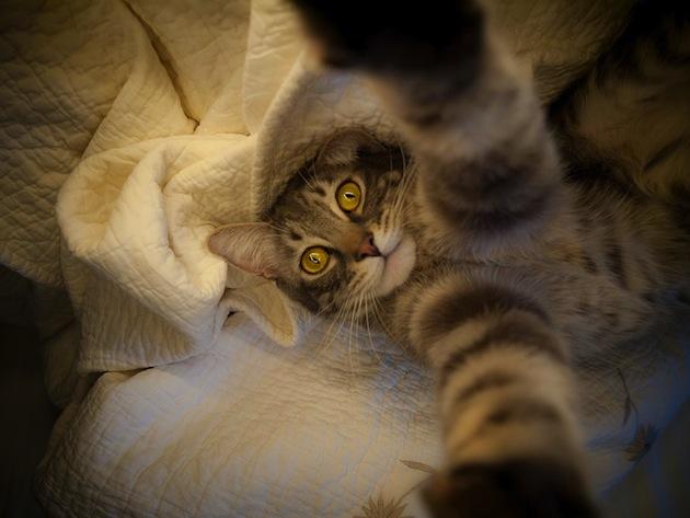 Gatos han dominado los selfies 07
