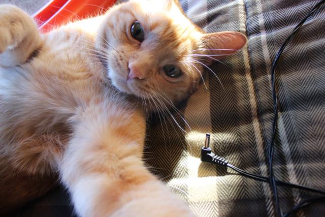 Gatos han dominado los selfies 08