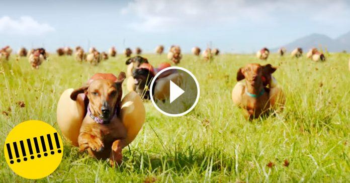 La estampida de perros salchichas Heinz super bowl banner2