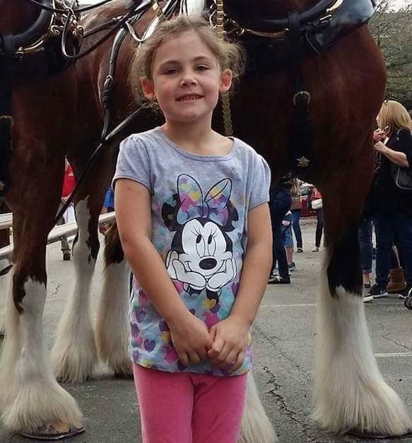 caballo photobomb fotografia viral 01