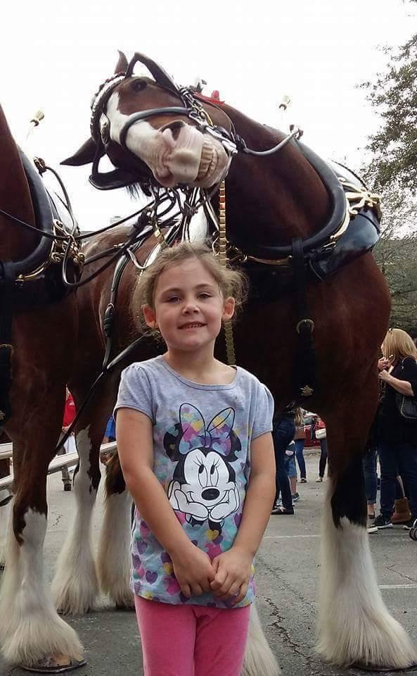 caballo photobomb fotografia viral 03