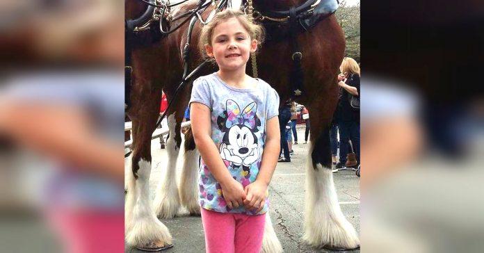 caballo photobomb fotografia viral banner