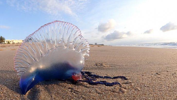 """10 Cosas que hay que saber sobre los """"asesinos"""" de las playas"""