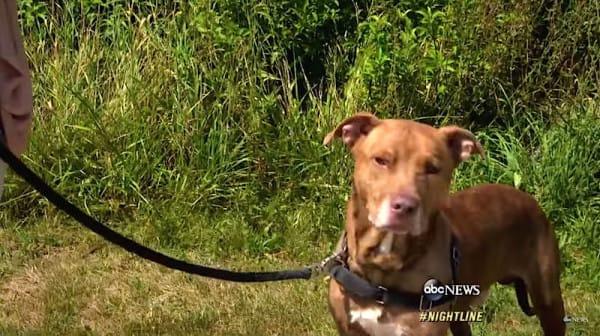 Esta Horrible Mujer fue Pillada maltratando a su Perro — Entonces el Juez le hizo hacer ESTO