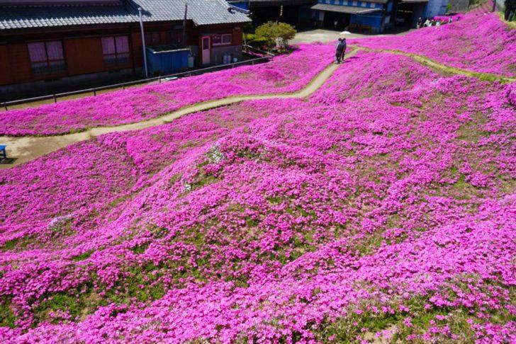 marido planta jardin flores mujer ciega kuroki japon 02