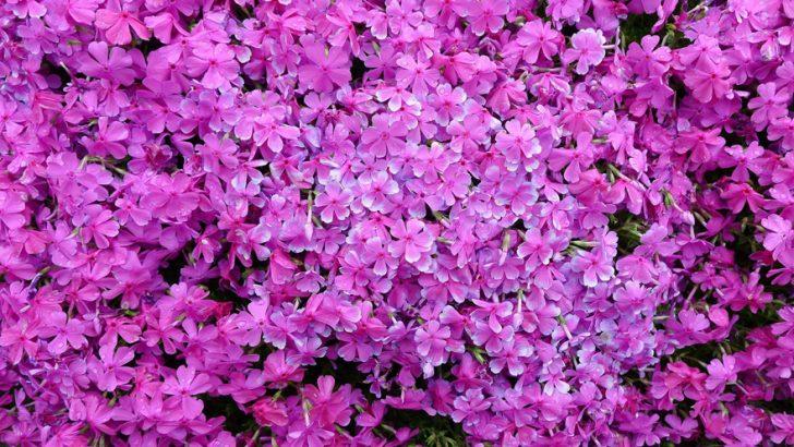 marido planta jardin flores mujer ciega kuroki japon 03