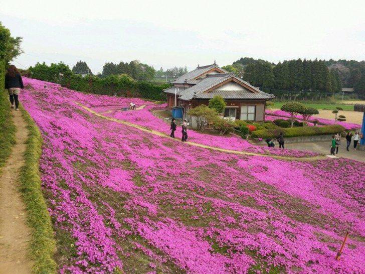 marido planta jardin flores mujer ciega kuroki japon 04