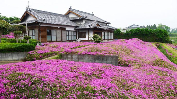 marido planta jardin flores mujer ciega kuroki japon 05