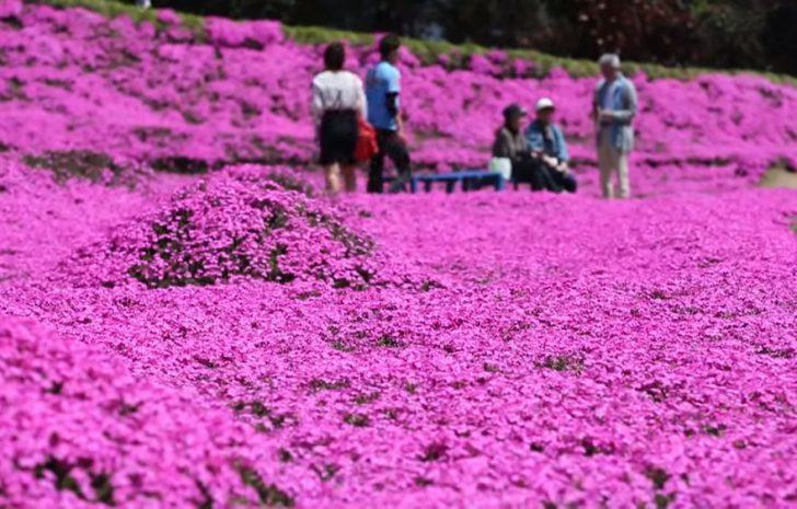 marido planta jardin flores mujer ciega kuroki japon 06