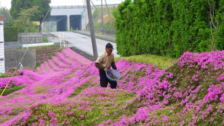 marido planta jardin flores mujer ciega kuroki japon 07