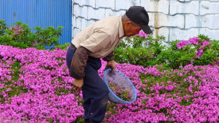 marido planta jardin flores mujer ciega kuroki japon 08